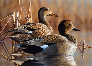 Artists Sought for 2018 North Carolina Duck Stamp Competition